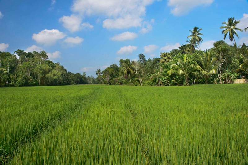 Ivory House a Luxury Villa surrounded by Paddy in Galle, Sri Lanka